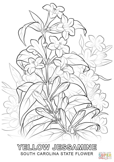 coloring pages of state flowers south carolina state flower coloring page free printable