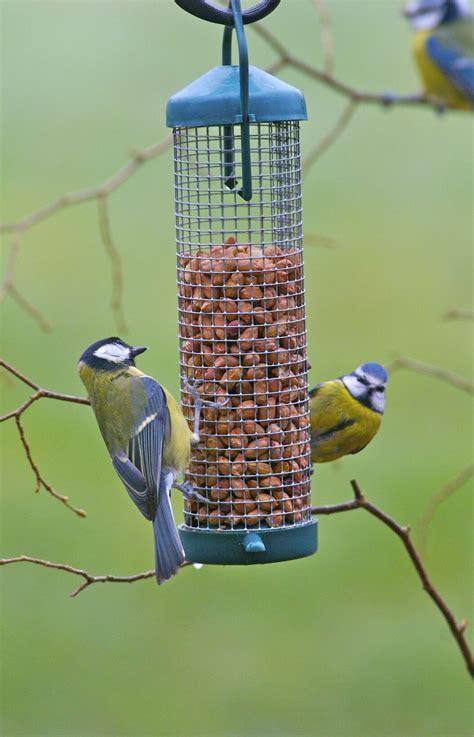 premium peanuts for birds birds peanuts twootz com