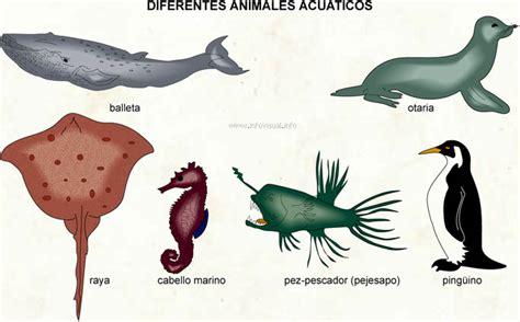 imagenes animales acuaticos y terrestres imagenes de animales terrestres acuaticos y aereos