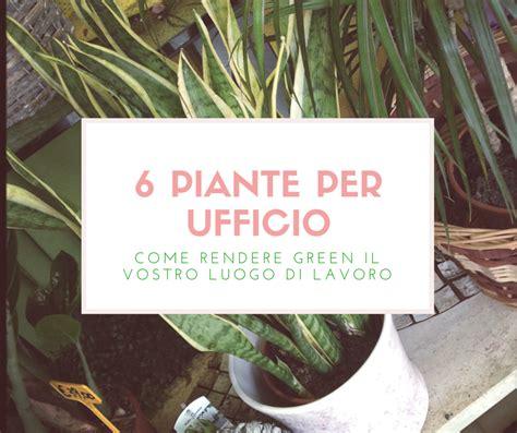 piante da ufficio 6 piante per il vostro ufficio un elenco di alcuni idee green