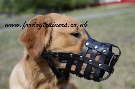golden retriever muzzle golden retriever muzzle muzzle for golden retriever daily use
