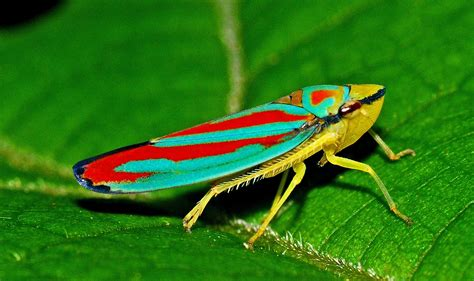 colorful bugs true bugs the the bad the welcome wildlife