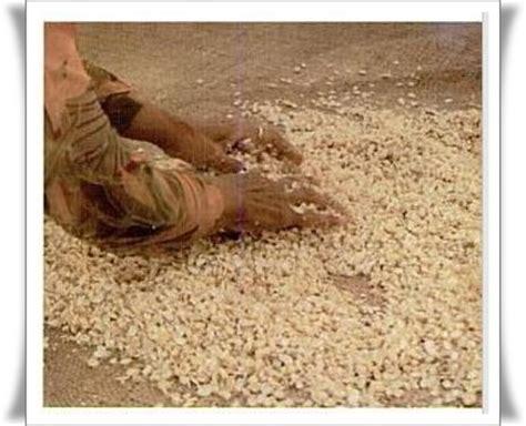cara membuat jamu kunyit asam beserta gambarnya proses pembuatan tempe pertanian carapedia