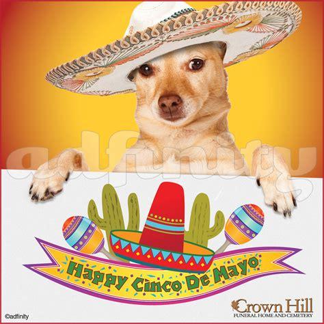 Cinco De Mayo Meme - happy cinco de mayo images www pixshark com images