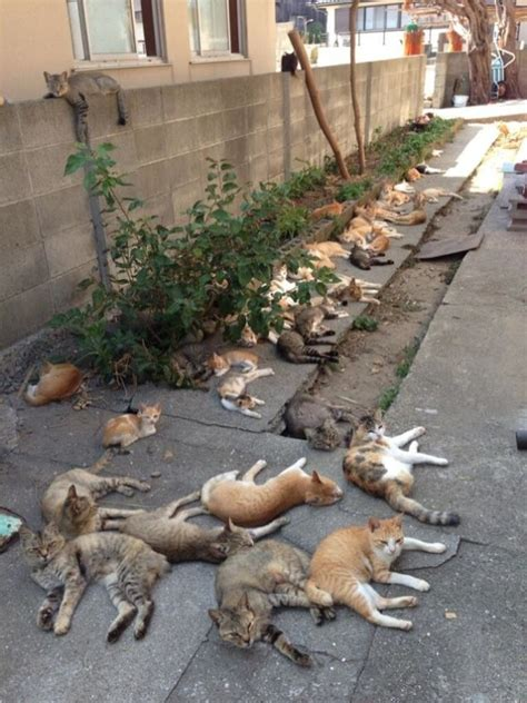 cat island in japan cats rule these japanese islands