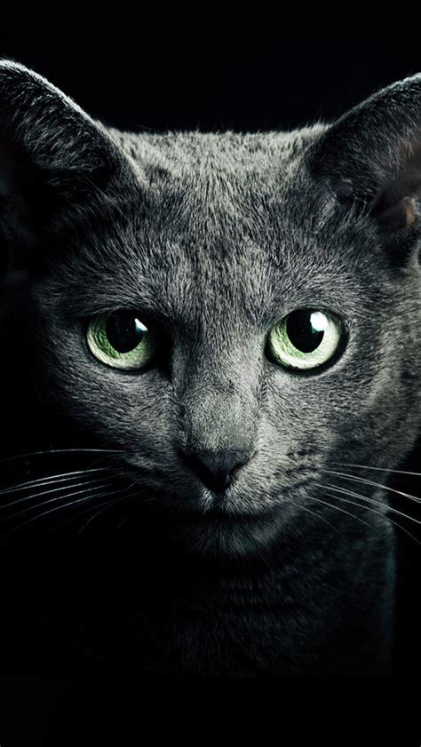 black cat wallpaper iphone black cat black background iphone wallpaper 640x1136