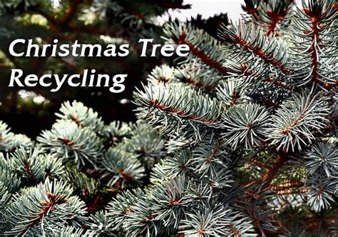 southlake christmas tree recycling program returns for
