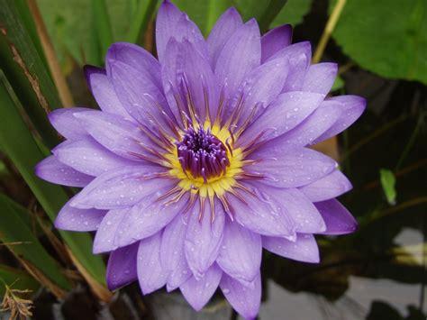 Hi Flower by Album