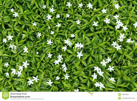 Flowery Top flower bed stock photo image 41854443