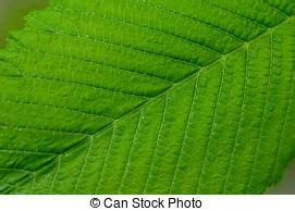 gr npflanze gro e bl tter bl 228 tter gr 252 n freigestellt sommer natur bl 228 tter baum