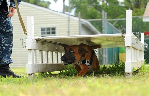 puppy obstacle course file flickr official u s navy imagery a working runs through an
