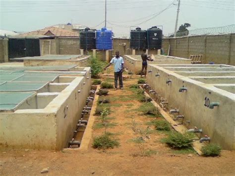sle business plan on fish farming how to start fish farming in nigeria kenya and ghana