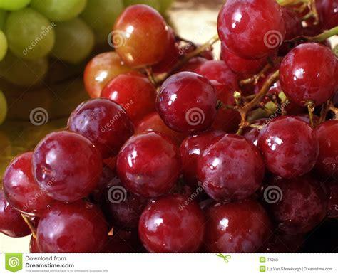 imagenes uvas rojas uvas rojas fotos de archivo imagen 74963