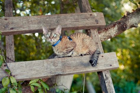 cat garden how to create a cat friendly garden adventure cats