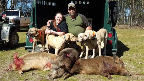 hog dogs for sale in hogs dogs for sale in