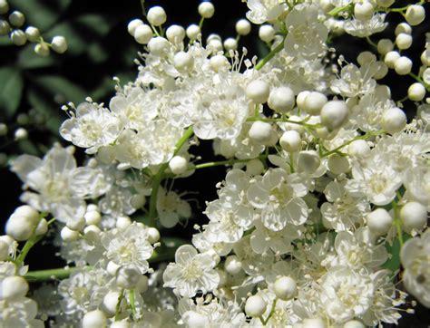Bunga Morning Blue Wildflower image gallery macro flower photos