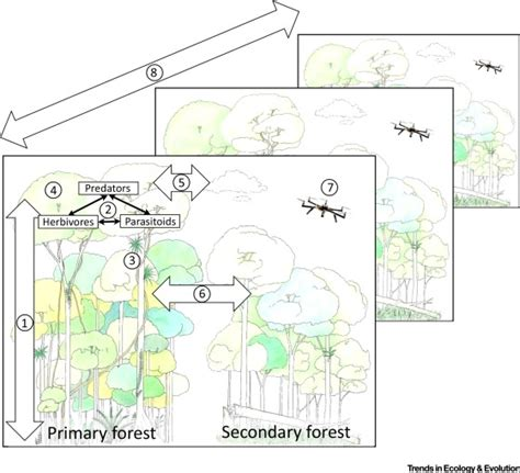 What Does Canopy In Science Forests And Their Canopies Achievements And Horizons In