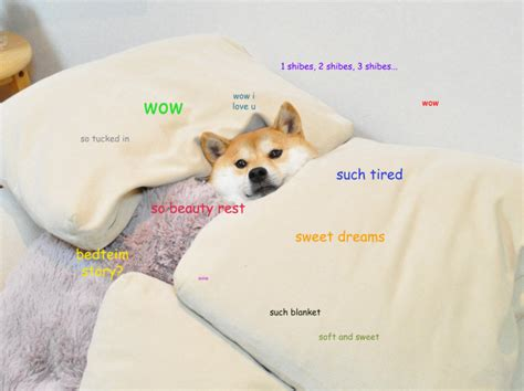 Such Dog Meme - understand the quot doge quot meme in 7 short steps the barkpost