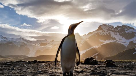 penguin linux wallpapers linux hint
