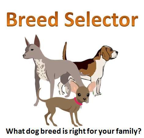 breed finder breed selector quiz