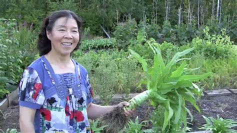 Farm House Designs by Unusual Chinese Vegetable Grows In City Backyard Youtube