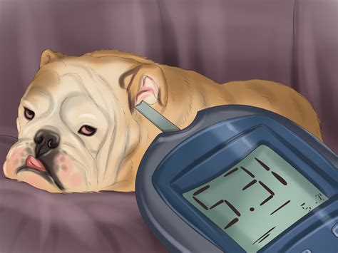 how to freshen dogs breath 3 ways to keep your s breath fresh wikihow