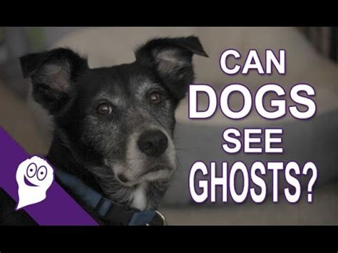 can dogs sense spirits in the house my dog can see ghosts doovi