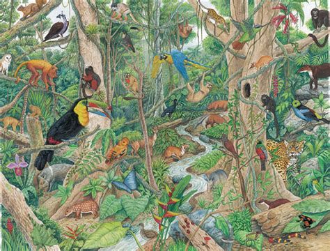 imagenes de animales de la selva garden selva h 250 meda tropical