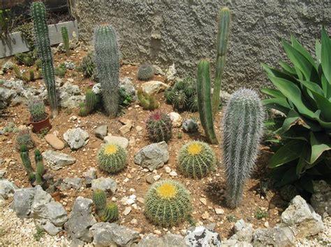 giardini rocciosi fotografie giardini rocciosi forum di giardinaggio it