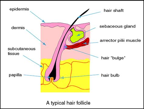 hair diagram hair sectioning diagrams hair diagram different layers