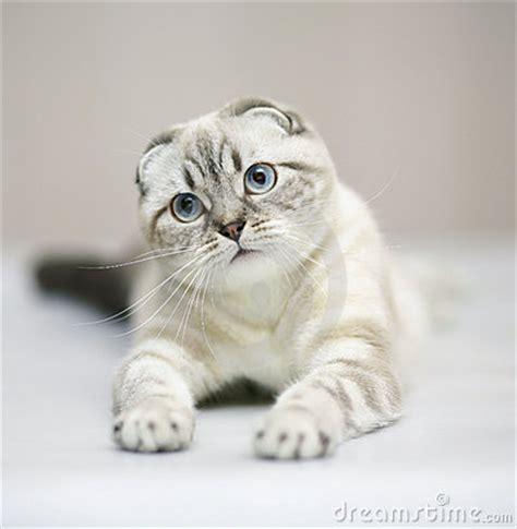 Sho Kucing House Of Anju santai 10 jenis kucing mahal yang dicari page 3
