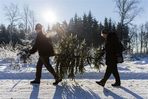 best christmas tree cutting experiences in the cleveland