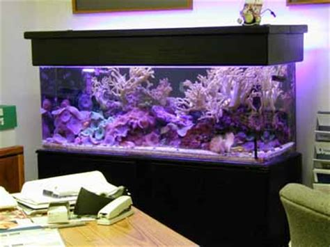 aquarium design ken 60 gallon soft coral reef tank aquarium design marine