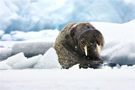 r fruitunion walruses