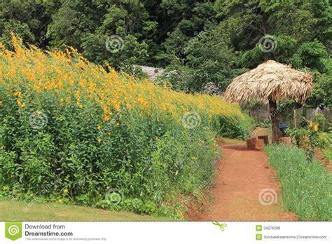 Cham Garden by Mon Cham Beautiful Garden In Chiang Mai Thailand Royalty