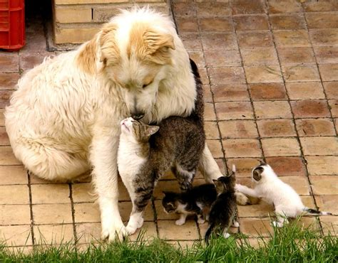 puppies with kittens cats bond with teh