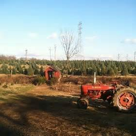 christmas tree farms in illinois rachael edwards