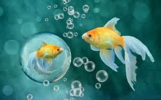 Waterful fish hd image only hd wallpapers