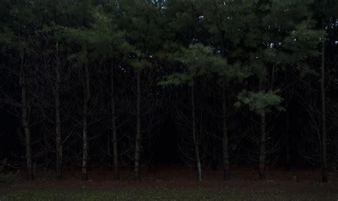 dark forest night image1 jpg night photography division matt sparling