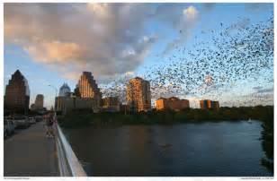 Bats Bridge Spence Reunion 2011 Up Congress Bridge Bats