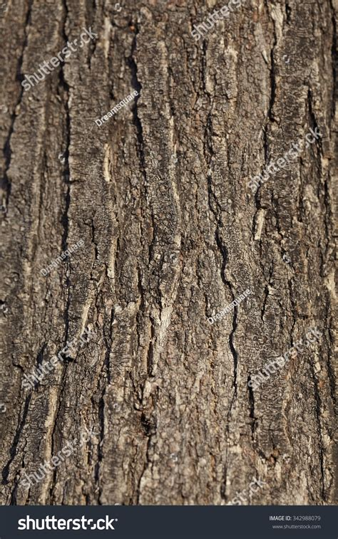 pine tree bark background old tree trunk detail texture