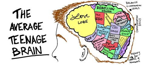 the separate sections of a large musical work are called brain model project goodpsychology