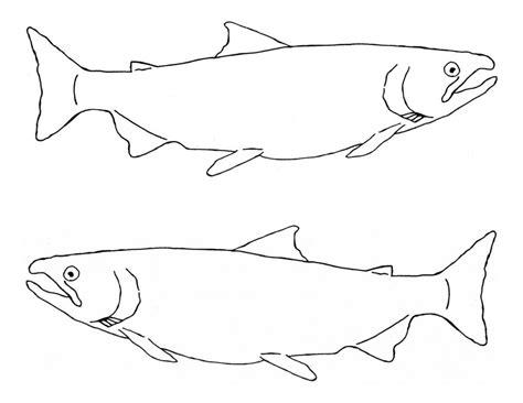 king salmon coloring page chinook salmon coloring page sketch coloring page