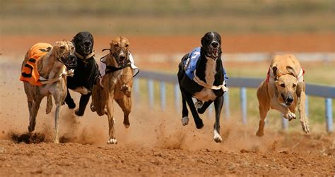 puppy race track supports push to make racing illegal in arizona arizona capitol times