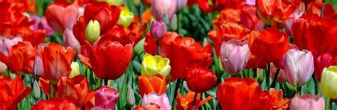 fiori di marzo diamo il benvenuto alla primavera con i fiori di marzo