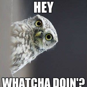 White Owl Meme - 29 funny owl memes that are so funny they re actually a hoot