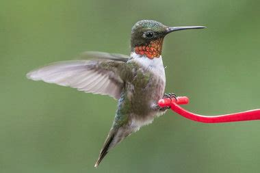 here s how to track all the hummingbirds on their way to