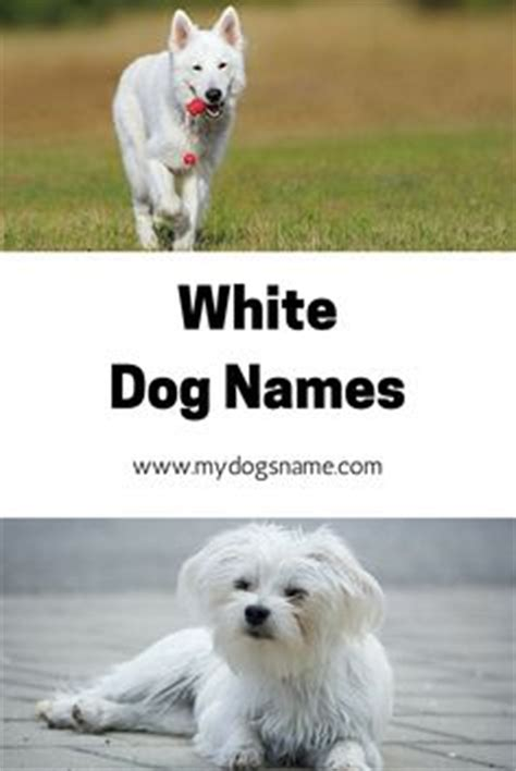dogs name from up names on names names and best food brands