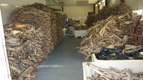 Supplier Norwegin By nigeria s forex push stockfish suppliers to bankruptcy afkinsider