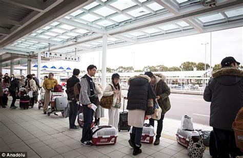 Maskapai Penerbangan di Jepang Izinkan Anjing Masuk Kabin